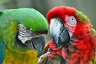 Two Parrots by Savannah Gibbs