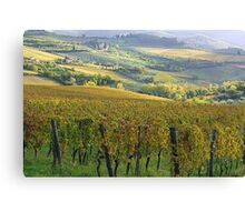 Fontodi's wineyards in Panzano - Toscana Canvas Print