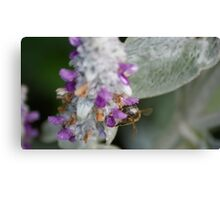 A bee collecting its morning feed Canvas Print