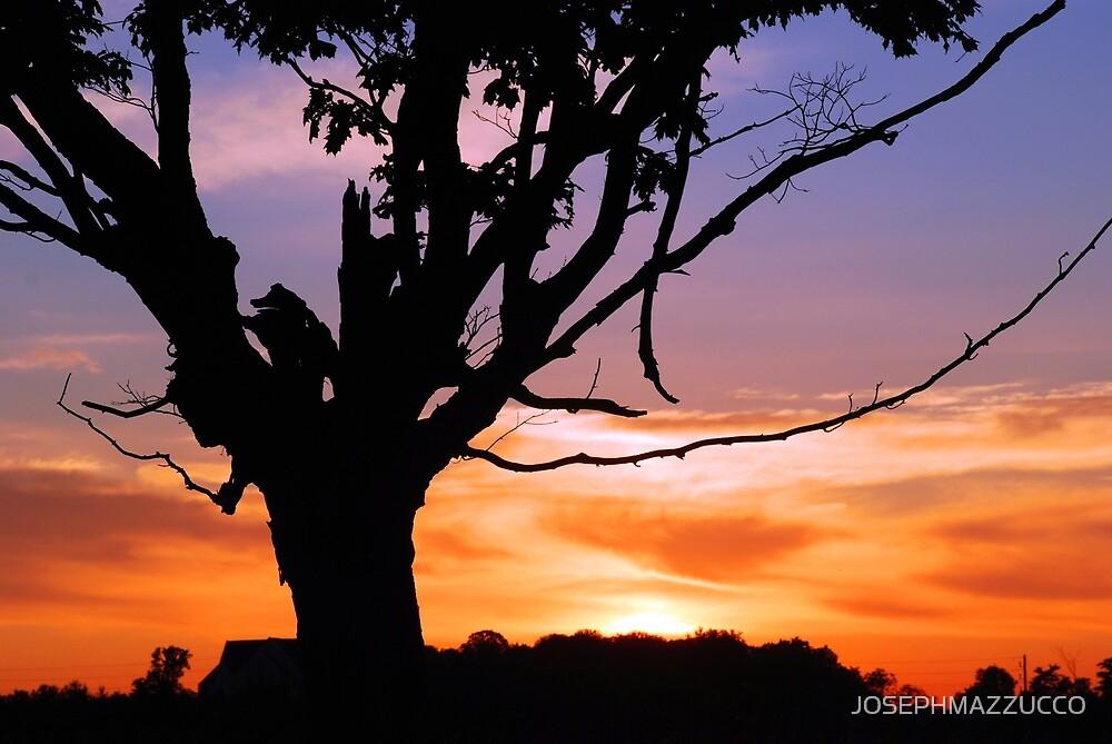 sunset canvas.. by JOSEPHMAZZUCCO