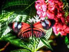 Red Butterfly by Bill Wetmore