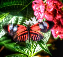 Red Butterfly by njordphoto