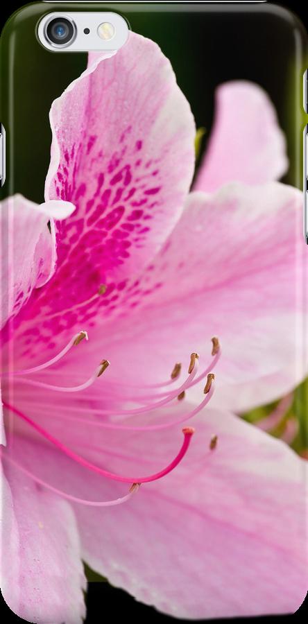 The Pink Azalea - iPhone / iPad Case by Jim Haley