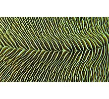 Finely Sliced Photographic Print