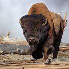 Geyser Bison by JamesA1