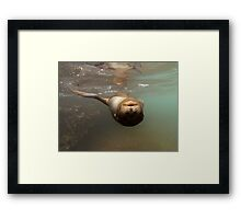 upside down sea lion Framed Print