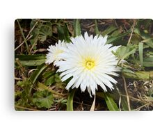 pretty flower in a pretty place Metal Print