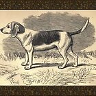 Vintage Beagle Greeting Card by Yesteryears