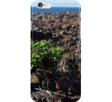 lone plant on lava rock iPhone Case/Skin