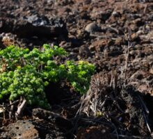 lone plant on lava rock Sticker