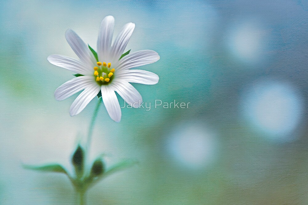 A Touch of White by Jacky Parker