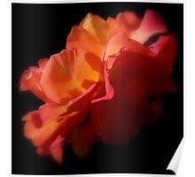 Roses Of Portland ~ Part Nine Poster