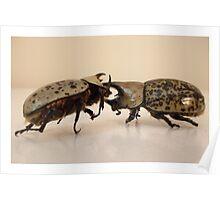 Hercules Beetle Poster