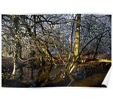 Reflections, Woodland Waters, Ancaster,Lincolnshire Poster