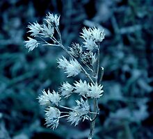 Blue Whisper - Monochrome ^ by ctheworld