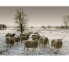 Winter flock Photographic Print