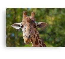 Giraffe at Denver Zoo Canvas Print