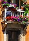 VENICE WINDOW by Thomas Barker-Detwiler