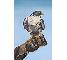 Tethered Tiercel Photographic Print