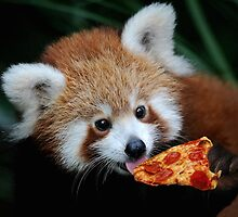 Red Panda and Chill by Optimistic  Sammich