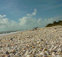Shells by Nancy Aranda