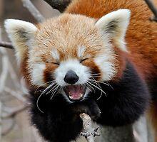 Panda Tongue by Optimistic  Sammich