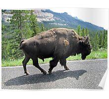 Bison Stroll Poster