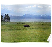 The Bison Wanderer Poster