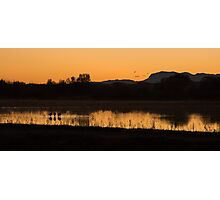 Cranes after sunset Photographic Print