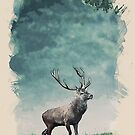 lone buck by Adam Asar