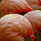 Swan Song.........? No, just Pink Flamingoes     ^ by ctheworld