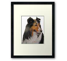 Sheltie Framed Print