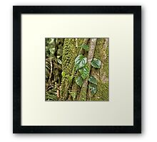 Leaves and moss in rainforest near Kuranda Framed Print