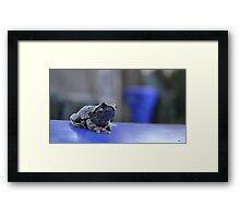 Toad Master Framed Print