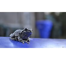 Toad Master Photographic Print