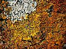 Lichen by Frederick James Norman