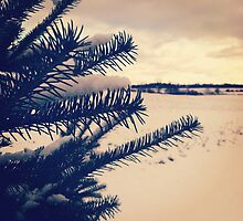 Winter Pine by Josrick