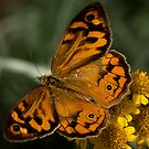 Butterfly Kisses by Bree Schammer