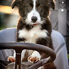 Working Dog by Kym Howard