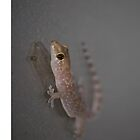 Gecko On Glass by antmason