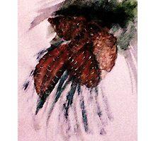 Pine cones, watercolor Photographic Print
