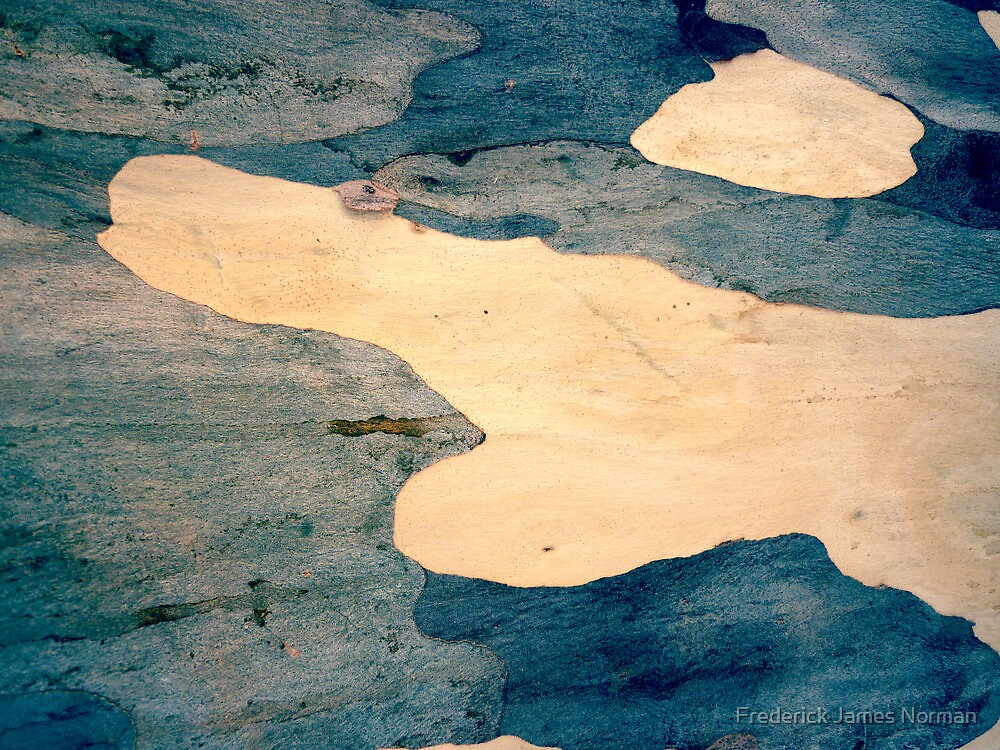 Bark Abstract # 8 by Frederick James Norman