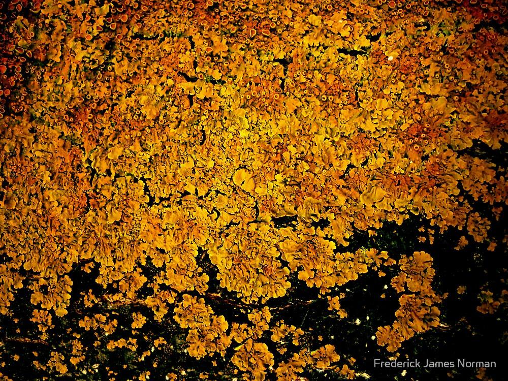 Lichen # 3 by Frederick James Norman
