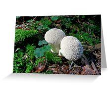 Lycoperdon perlatum- the Warty Puffball Greeting Card