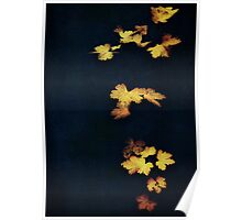 Velvet Leaves Poster