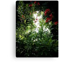 Bright Light Canvas Print