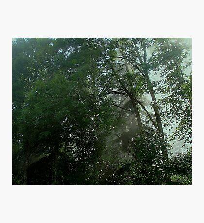 Forest Vapors Photographic Print