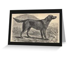 Vintage Irish Setter Greetings Greeting Card