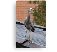 Maybe I can see better up here... Canvas Print