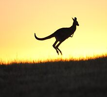 The Aussie Icon - Kangaroo - Whittlesea, Victoria by Heather Samsa